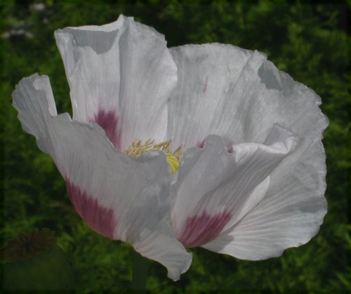 2008-07-19